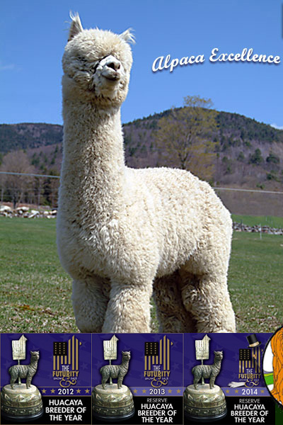 A male Alpaca from the Cas-cad-nac Farm Herd